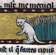 Chat medieval 1